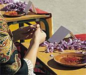 Saffron Rose Festival in Spain