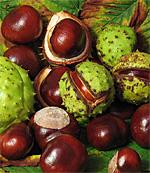 Chestnut Fair