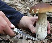 Mushroom Days in Croatia