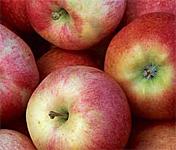 Georgia Apple Festival