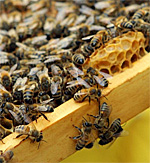 Headed to London? Check out the Bees!