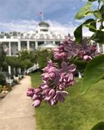 A Taste of Mackinac Among the Lilacs