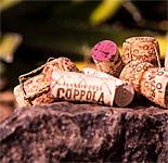 """Corks & Cactus"" at the Desert Botanical Garden"