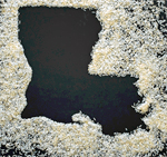 Ingrained – The History of Rice in Louisiana